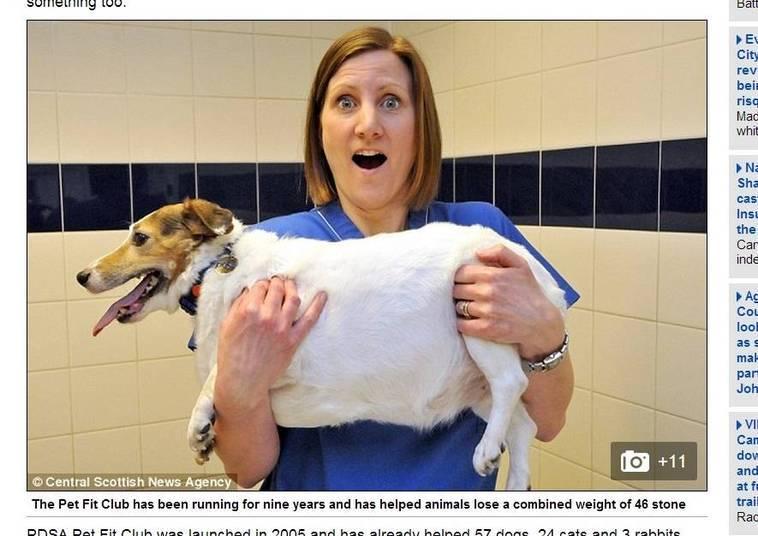 O PDSA Pet Fit Club, como o projeto foi batizado, existe há nove anos e já ajudou 84 animais a perderem 295 kg
