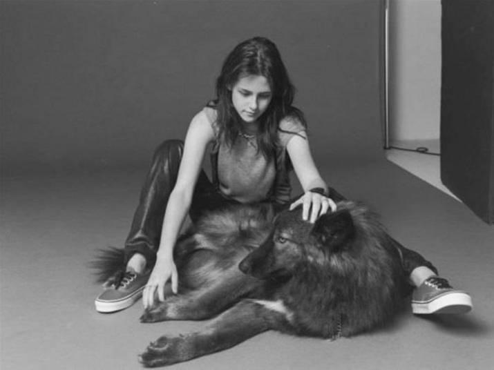 Será que Kristen Stewart se deixou influenciar pela saga 'Crepúsculo'? A atrizescolheu um filhote híbrido de lobo para ser seu companheiro+ Opine: Você teria um animal exótico em casa?