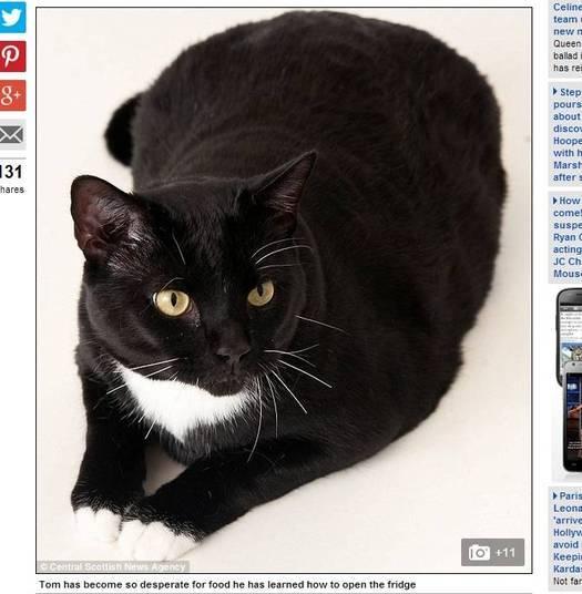 O gato Tom gosta tanto de comer que já aprendeu a abrir a porta do armário de mantimentos