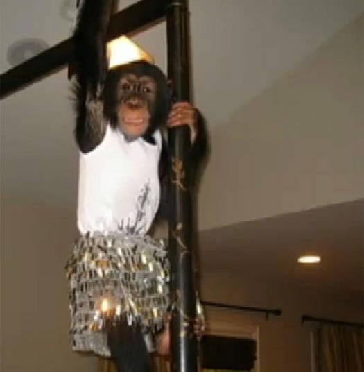 A socialite Kim Kardashian também é do time de famosos que têm macacos em casa+ Opine: Você teria um animal exótico em casa?