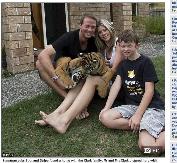 Nada como um álbum de família: papai, mamãe, filhinho e os dois tigres de estimação. Sim, tigres. A família Clark vive com os dois animais selvagens como se fossem gatinhos
