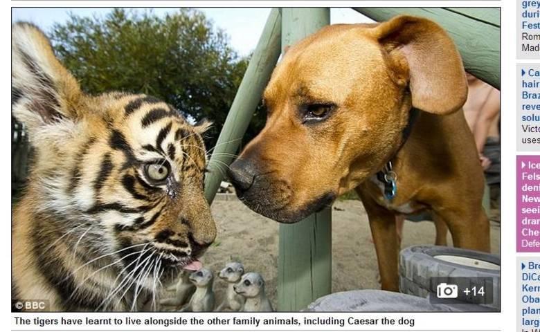 Os animais também passaram a interagir com o cachorro da família