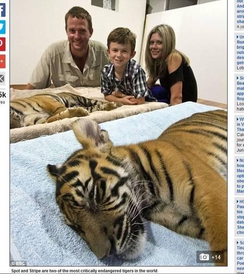 Além de receber os cuidados necessários, os animais foram se apoderando do espaço da família
