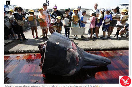 Turma de alunos, todos com cerca de dez anos, assistem ao corte da baleia Reprodução/independent.co.uk