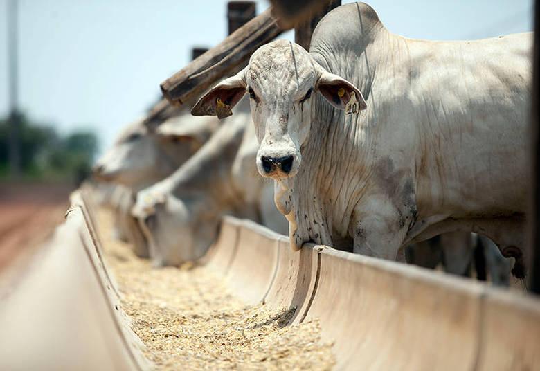 Garnero investe bastante em gado. Ele tem, por exemplo, uma vaca da raça Nelore avaliada em R$ 260 mil
