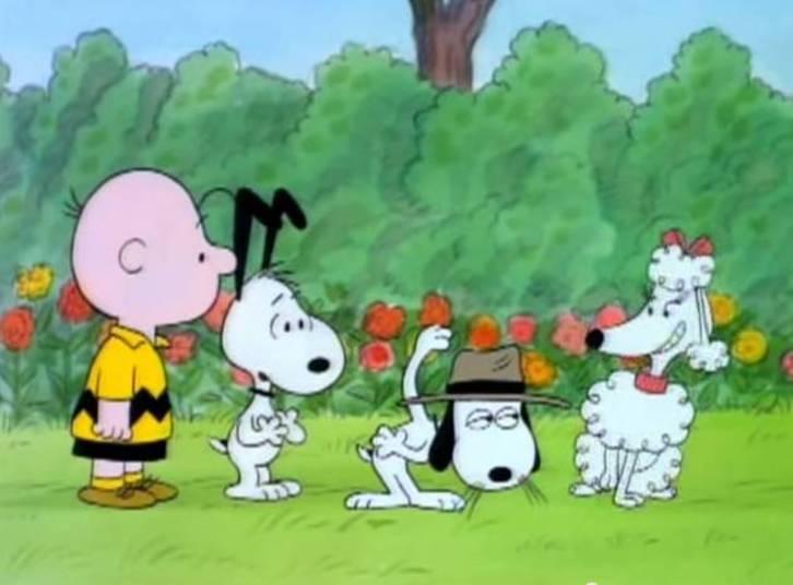 """Charlie Brown é o exemplo de desenho que deu certo e ainda promete encantar diversas gerações. Poucas pessoas sabem, mas a criação de Schulz data de 1950. O desenho retratava as inseguranças do personagem que sempre cruzava com alguma situação complicada, mas nunca desistia devido à determinação e esperanças inesgotáveis. Nas telinhas, ele nunca chegou a ter mais que 11 anos. Assim como muitos cartoons, ele tinha um cachorro de estimação, Snoopy — que na verdade """"mandava"""" no dono e sumia quando lhe dava na telha. O elenco contava com Lucy, Patty Pimentinha , Marcie e Lino, sempre acompanhado de um cobertor azul. A curiosidade é que os adultos da animação não podiam ser ouvidos nem vistos, apenas da cintura para baixo"""