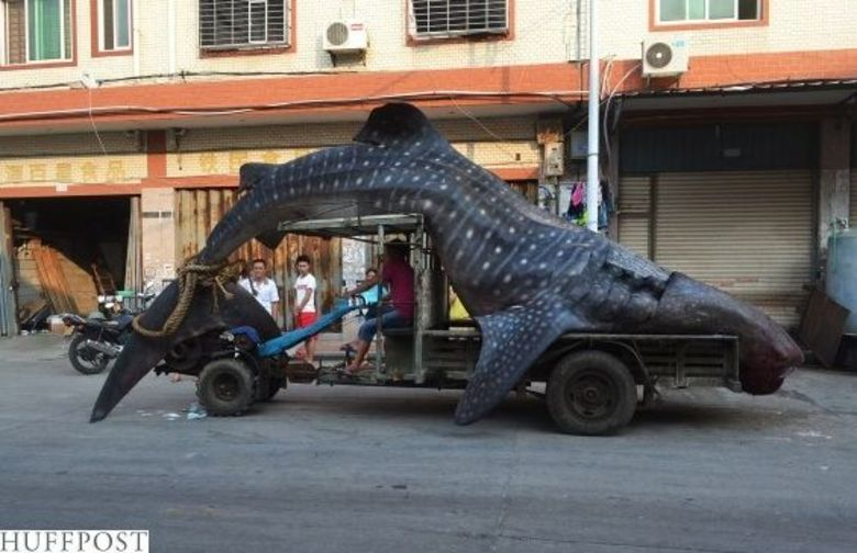 A captura misteriosa deu o que falar na China!Mas a hist�ria de capturas de monstrengos � bem grande. Veja outros casos!