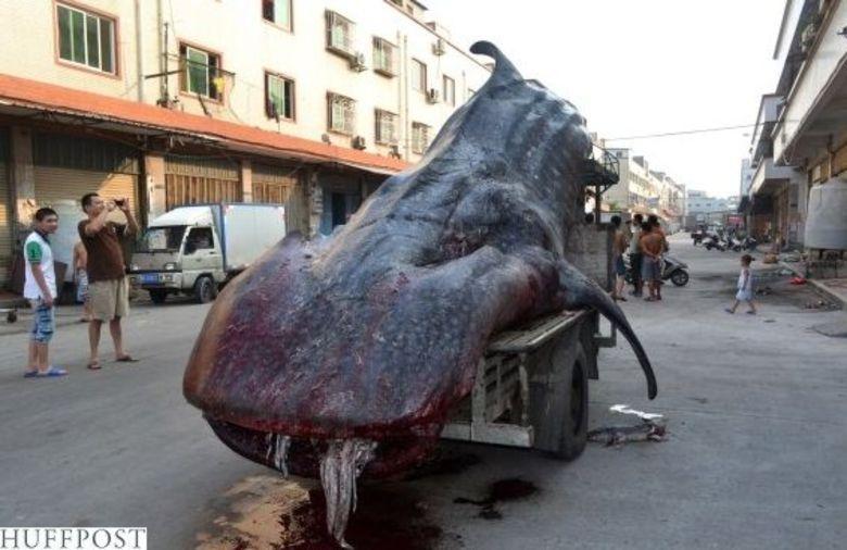 Algumas pessoas se assustaram com o transporte e desconfiaram da hist�ria dos pescadores. Algumas testemunhas chegaram a dizer a um canal de televis�o chin�s que eles estariam querendo vender o peix�o e estavam indo direto pro mercado!