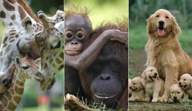 Bichos fofos cuidam de seus filhotes com muito amor. Veja