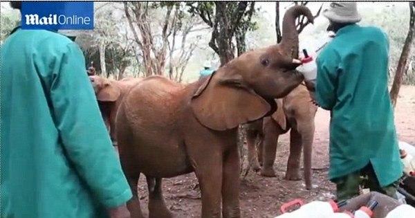 Boa ação: africano cuida de 21 bebês elefantes órfãos - Mulher - R7 ...
