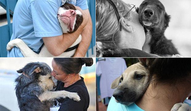 Que mimo gostoso! Cachorros carinhosos dão abraços apertados em seus donos