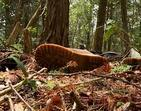 Mais de cem corpos são encontrados no bosque da morte