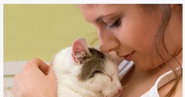 Seu gato te ama? Veja os 10 sinais de que seu melhor amigo é ...