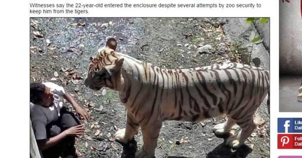 Tigre branco devora jovem em frente ao público no zoológico na Índia