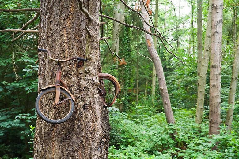 E não vai demorar pra natureza começar a engolir as bicicletas, também