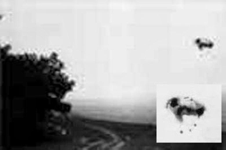 São OVNIs, ou supostas aves alienígenas, de todas as formas, sempre sobrevoando a floresta