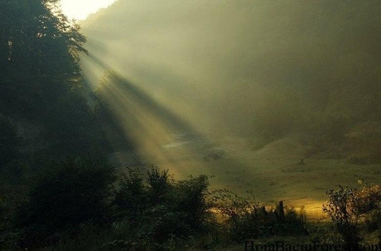 Antes desses avistamentos, a floresta era conhecida por histórias ainda mais misteriosas