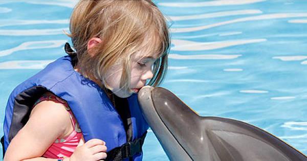México realiza seu sonho de nadar com golfinhos - Fotos - R7 ...