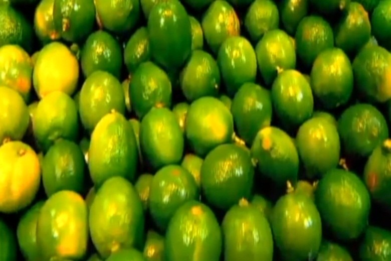 Por ser alcalino, age no organismo como anti-inflamatório, que ajuda a eliminar gordura e funciona de forma mais eficaz reduzindo o pesoNo R7 Play você pode assistir ao Fala Brasil na íntegra! Clique e experimente de graça!+ Veja mais sobre a dieta do limão