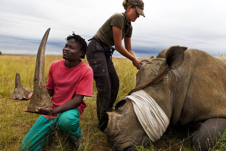 O homem disse também que orientou seus funcionários a fazerem o que puder, o que for preciso, 'custe o que custar'. Para ele, se as pessoas não se unirem para proteger os rinocerontes, nós perderemos uma outra espécie.'Eles são tão importantes quanto os mares, os camaleões, as pastagens e tudo mais. Toda espécie é emblemática por uma razão. Tire os elefantes e os rinocerontes do sistema ecológico e você vai ver todo um ecossistema destruído'