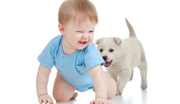 Seu filhote está dando os primeiros passinhos? Veja como ajudá-lo nessa fase
