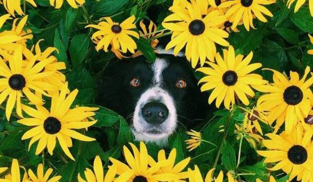 Wally canino! Veja as fotos e tente encontrar o cachorro escondido nelas