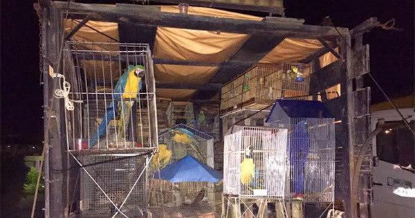 PRF apreende aves silvestres e veado mantido em cativeiro há dois ... - R7