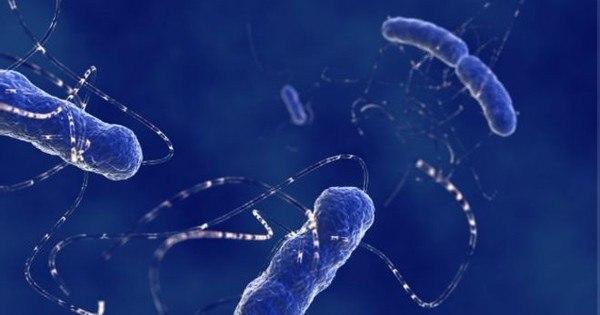 Cientistas descobrem mutação que torna bactérias imbatíveis por ...