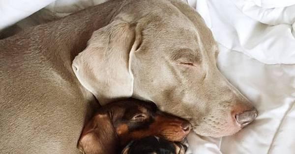 Amizade peluda! Cachorros superam as diferenças e formam a ...