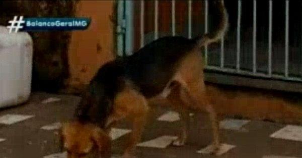 Cão vira-lata salva idoso de ser eletrocutado no sul de Minas - R7