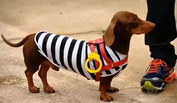 Evento reúne cachorros salsichas com fantasias muito estilosas. Veja como foi