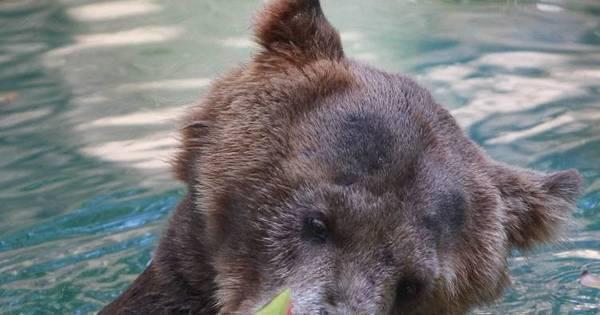 Zoo do Rio reabre nesta terça-feira após mais de 50 dias fechado ...