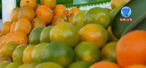 Safra de laranja deve ser a menor em 30 anos