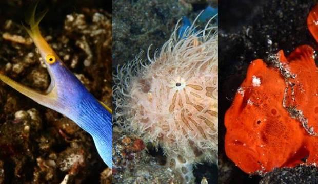 Mistérios do fundo do mar! Confira os animais marinhos mais inusitados da Indonésia