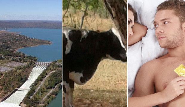 Idosa morre pisoteada por vaca, Sabesp admite racionamento e brasileiros não usam camisinha