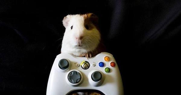 Saiba quais são os videogames mais usados pelos brasileiros ...