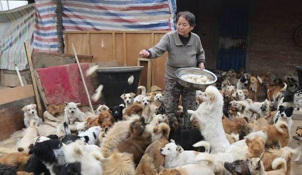 Mulheres idosas acordam às quatro da manhã para alimentar mais de mil cães abandonados