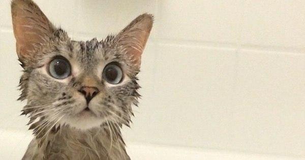 Conheça Nala, gatinho vira-lata que faz sucesso na web - Fotos ...