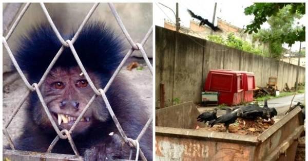 Zoo do Rio faz 70 anos com necessidade de obras e ameaça de ...