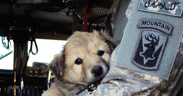 Cachorros e gatinhos conquistam soldados e ganham novos donos ...