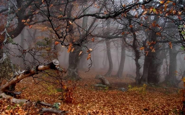 O fato é que as regiões próximas da floresta de Maules guardam outros tipos de aparição que podem ou não estar associadas com Le Loyon