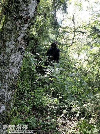 Segundo os que vagam pela floresta, ele passa pelo mesmo caminho quase todos os dias