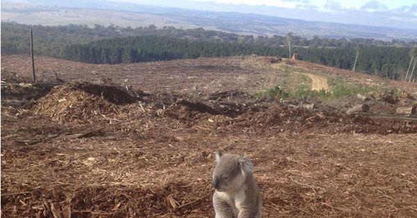 Animais sofrem consequências da destruição do meio ambiente ...