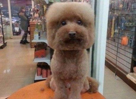 Pet shop deixa cachorrinhos quadrados com tosas esquisitas
