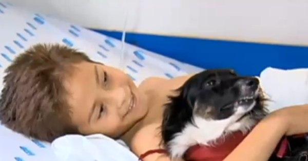 Cães ajudam na reabilitação de crianças doentes - Fotos - R7 Fala ...