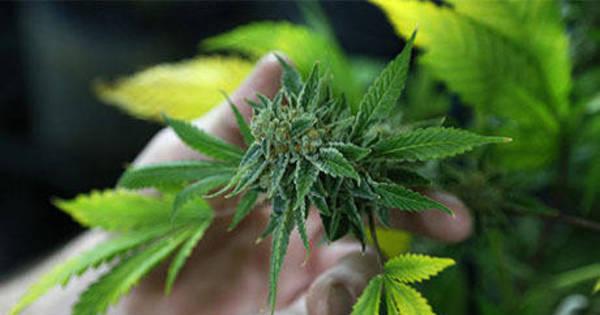 STF encerra sessão e adia julgamento sobre descriminalização das ...