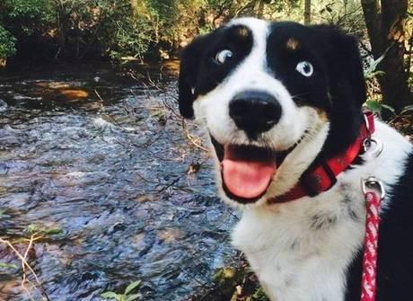 Estes animais felizes podem alegrar também o seu domingo