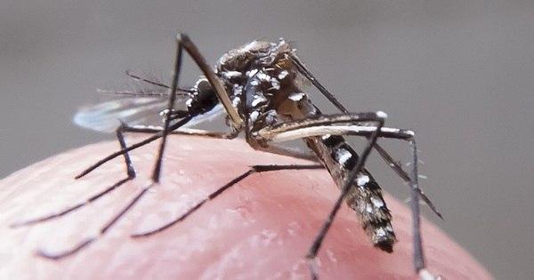 Fiocruz comprova relação entre zika e doença rara que ataca o ...