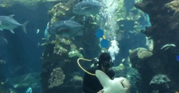 Tem coragem? Nadador faz carinho na barriga de um tubarão ...