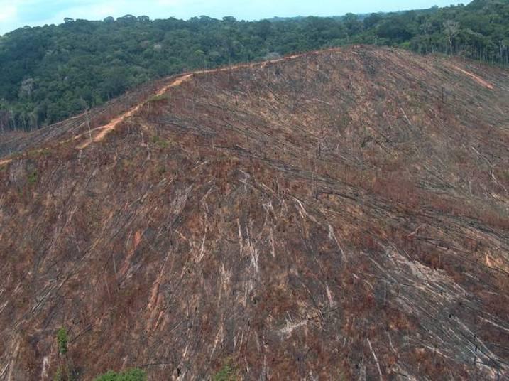 O desmatamento é outro problema sério que pode acabar com a vida humana na Terra. Ele ajuda a piorar a qualidade do ar, já que quanto menos plantas no planeta, menos gás carbônico é transformado em oxigênio. O fator também causará a extinção de outras espécies, segundo o estudioso de 95 anos
